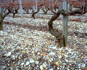 Vinarkæologi