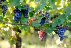 vinmark Charlottenlund Vin Club